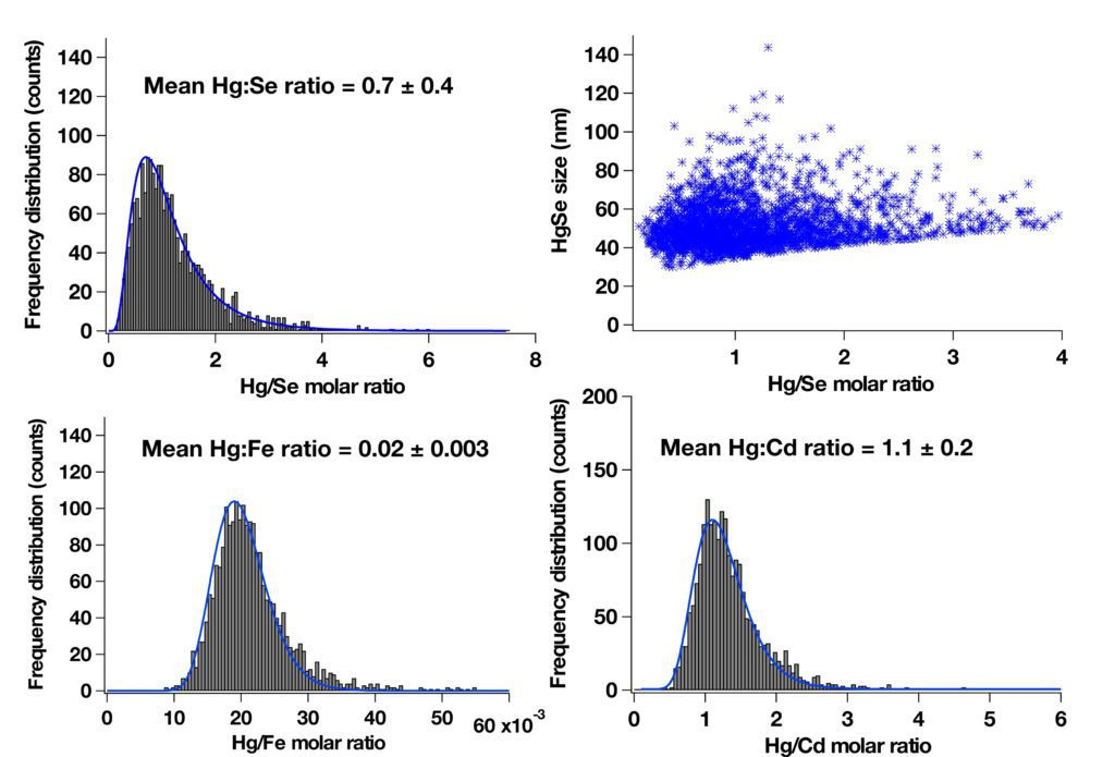 Figure 1. Frequency distribution histograms of Hg/Se, Hg/Fe, and Hg/Cd molar ratios in individual particles extracted from a whale liver and a correlation plot of HgSe particle sizes vs Hg/Se molar ratios acquired with an icpTOF in multi-element single particle mode. The collision-reaction cell was pressurized with 3 ml/min hydrogen to suppress Ar2+ interference on 80Se+. For details on sample preparation and sample characterization refer to (1). An isotope-specific threshold was applied to discriminate nanoparticle signals from the ionic background. Element molar masses per particle and particle sizes were determined using Au 8013 NIST CRM nanoparticles, Au solutions, Hg, Se, Cd, Fe-containing calibration solutions and the method proposed by Pace et al. based on known size of 8013 Au particle standard (2). Sample specific size detection limits for HgSe particles were estimated to be 40 nm assuming the density of 13.5 g/cm3 that corresponds to 110 ag of Hg and 300 ag of Se. Fe is most likely bound to the particle in a form of metalloprotein. Co-accumulation of Cd with Hg has been already observed in the previous work (3).