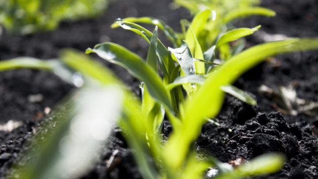 Plant VOC Emissions