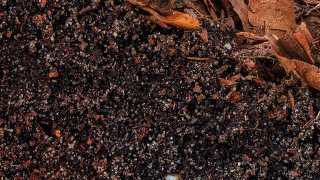 engineered nanomaterials in natural soil